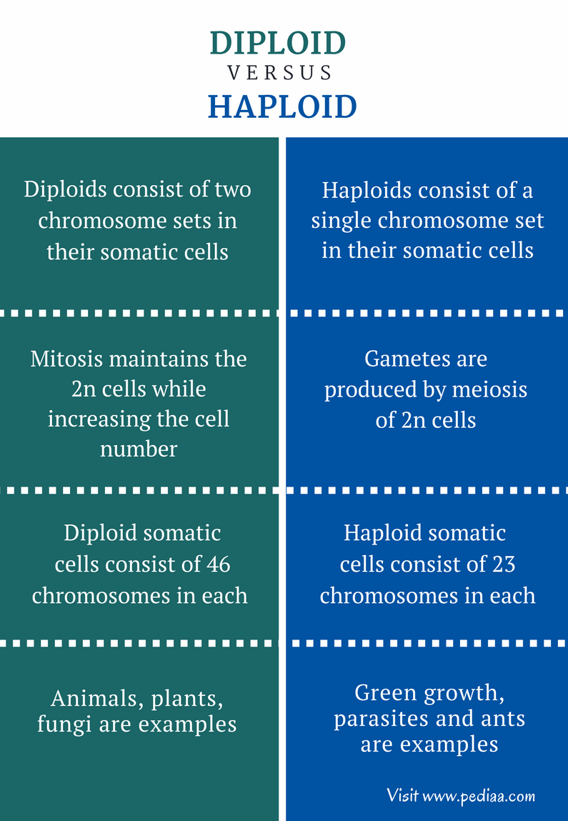Difference Between Diploid and Haploid - Comparison Summary