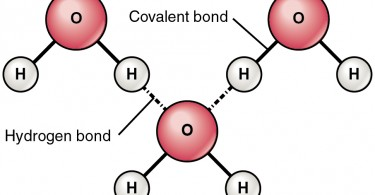Difference Between Intermolecular and Intramolecular Hydrogen Bonding