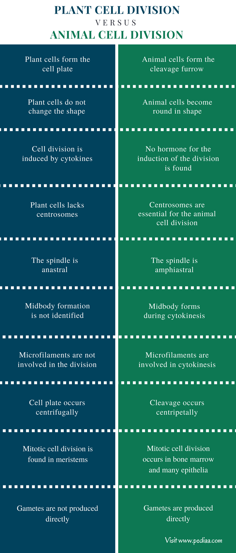 Difference Between Plant and Animal Cell Divisionn - Comparison Summary