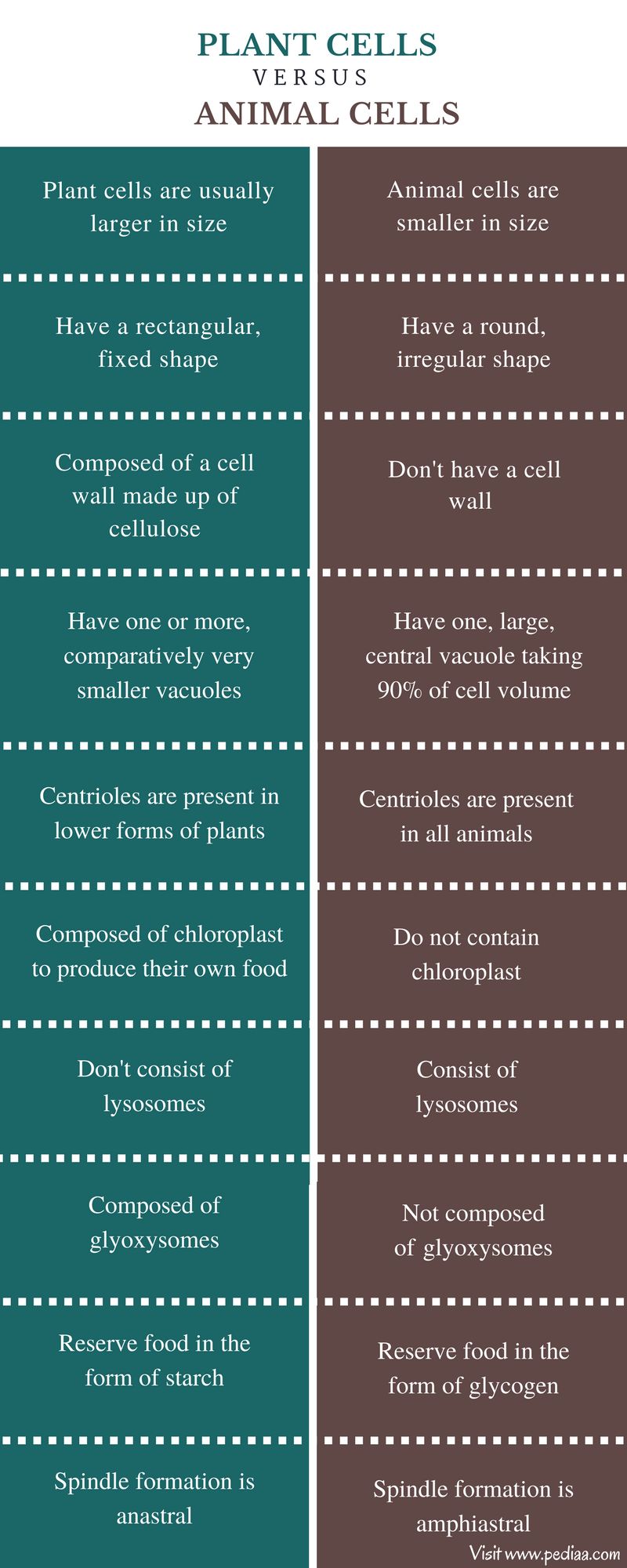 Difference Between Plant and Animal Cells - Comparison Summary