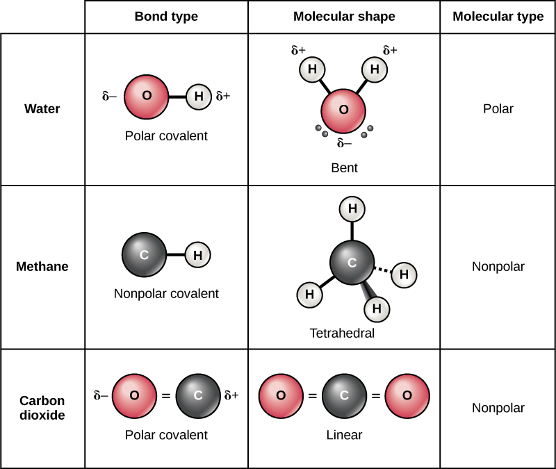 Difference Between Polar And Nonpolar Molecules