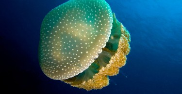 Difference Between Porifera and Coelenterata