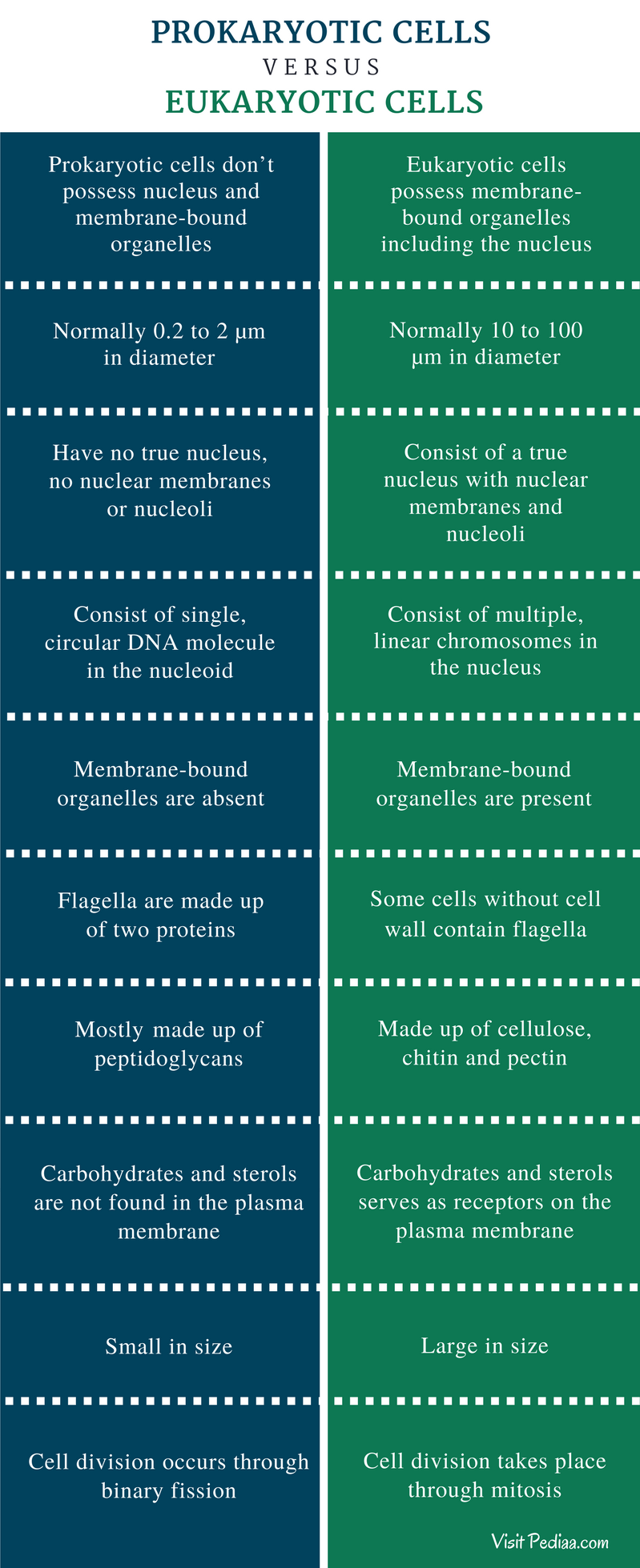 Difference Between Prokaryotic And Eukaryotic Cells - Comparison Summary
