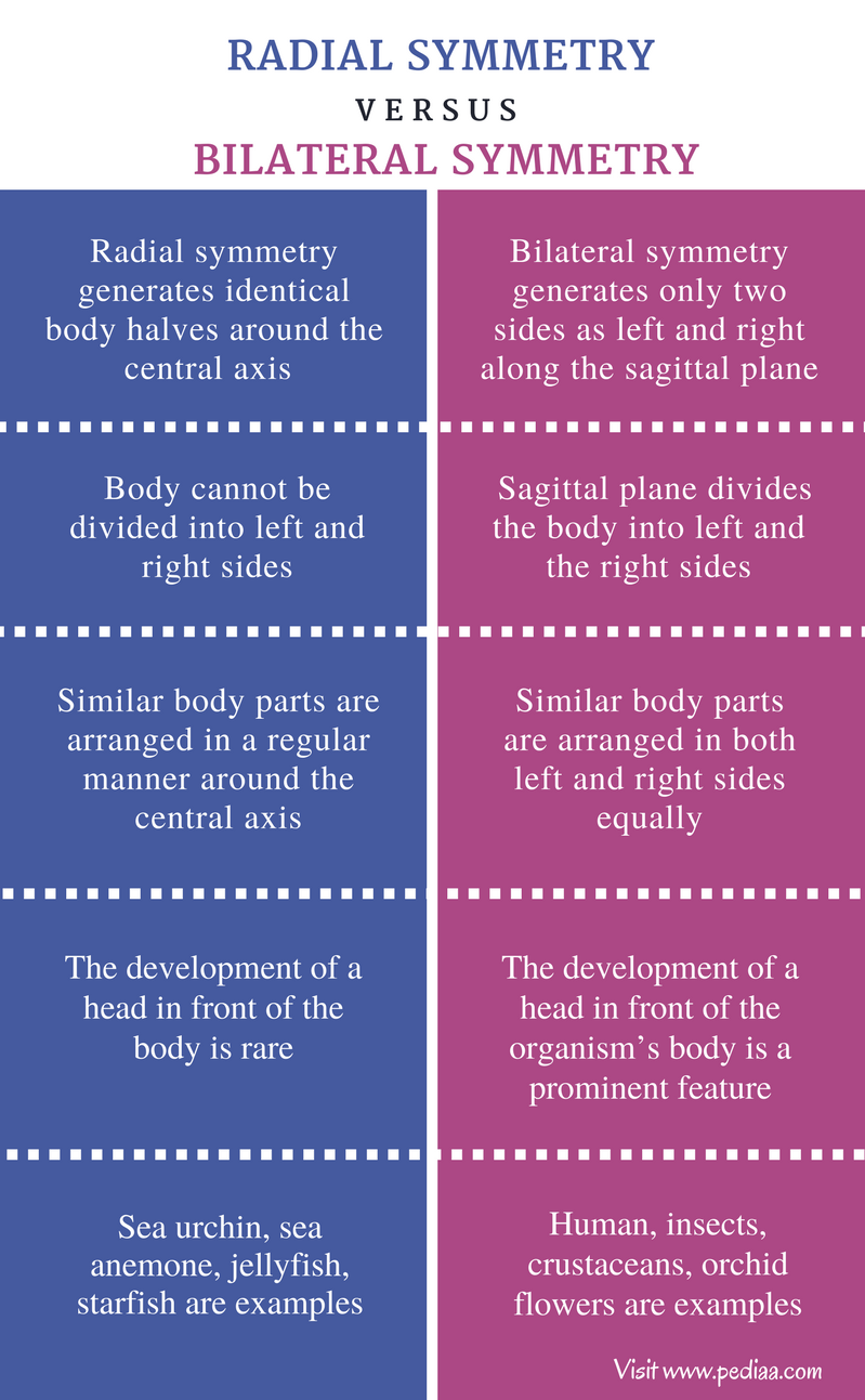 Difference Between Radial and Bilateral Symmetry - Comparison Summary