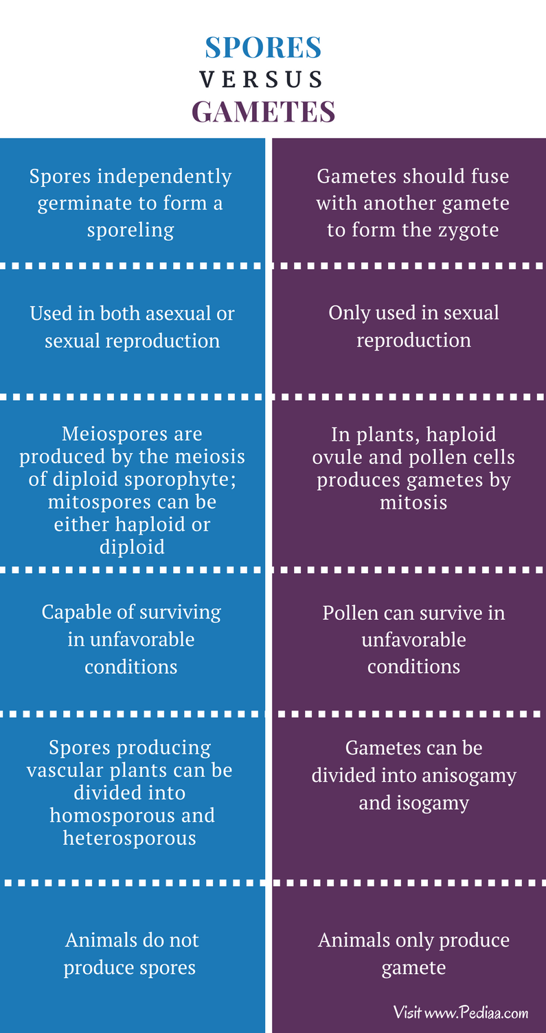 Difference Between Spores and Gametes - Comparison Summary
