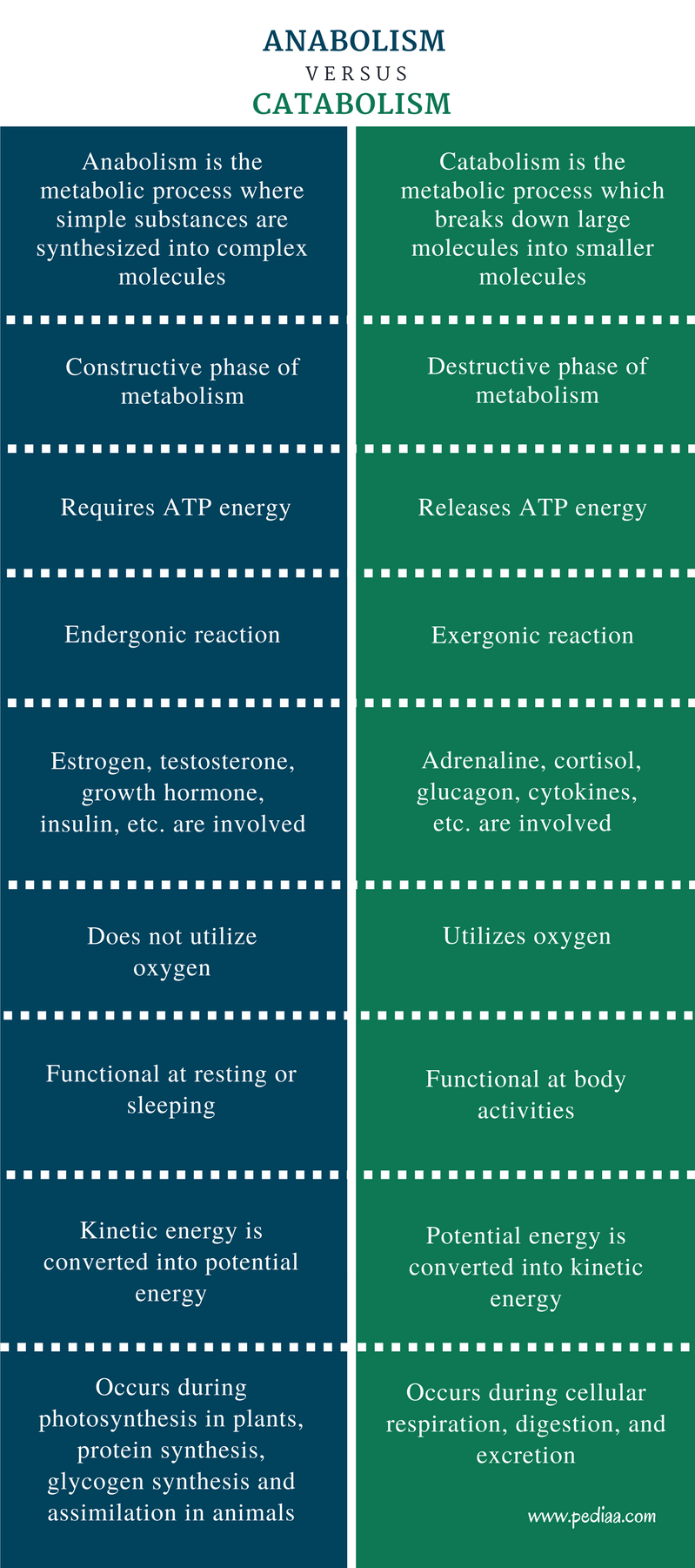 Difference Between Anabolism and Catabolism - Comparison Summary