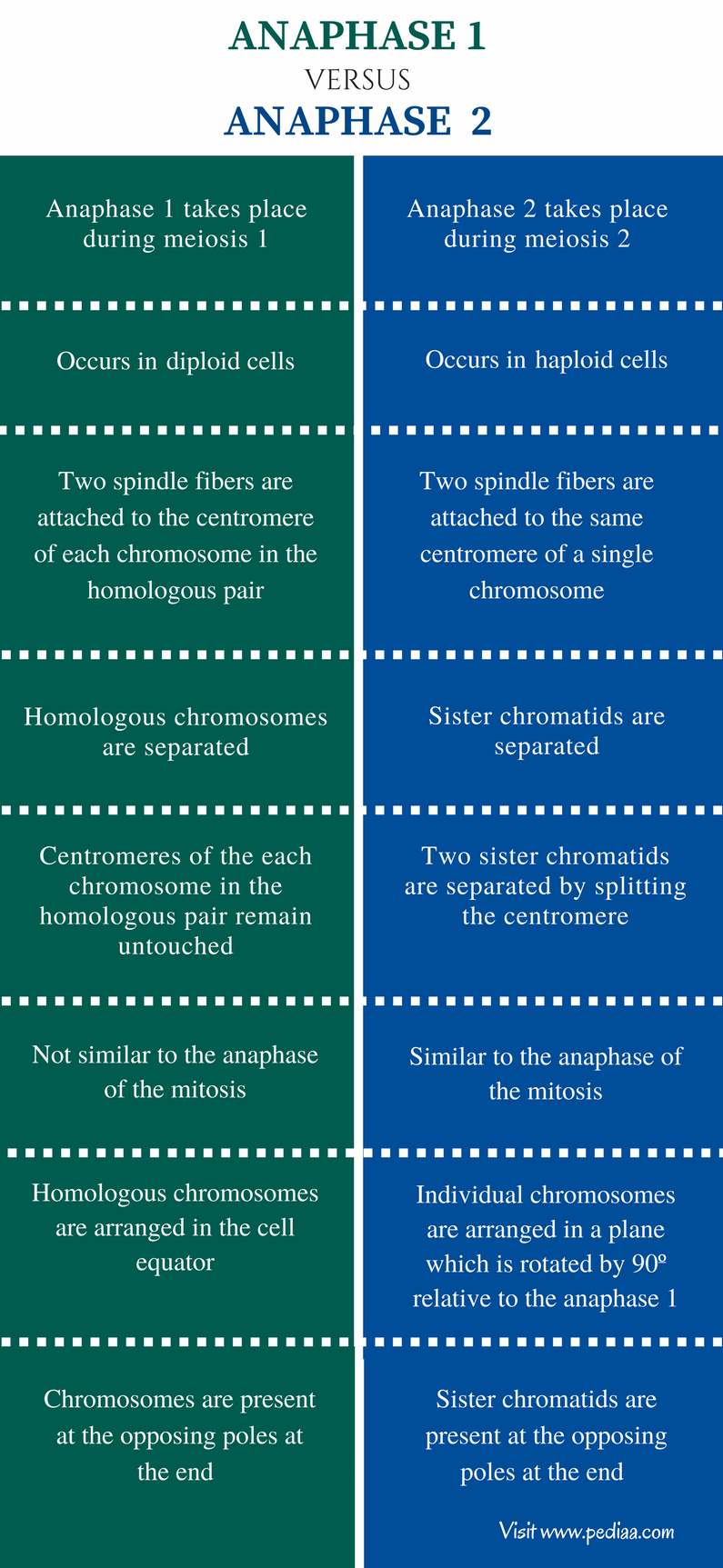 Difference Between Anaphase 1 and 2 - Comparison Summary (1)