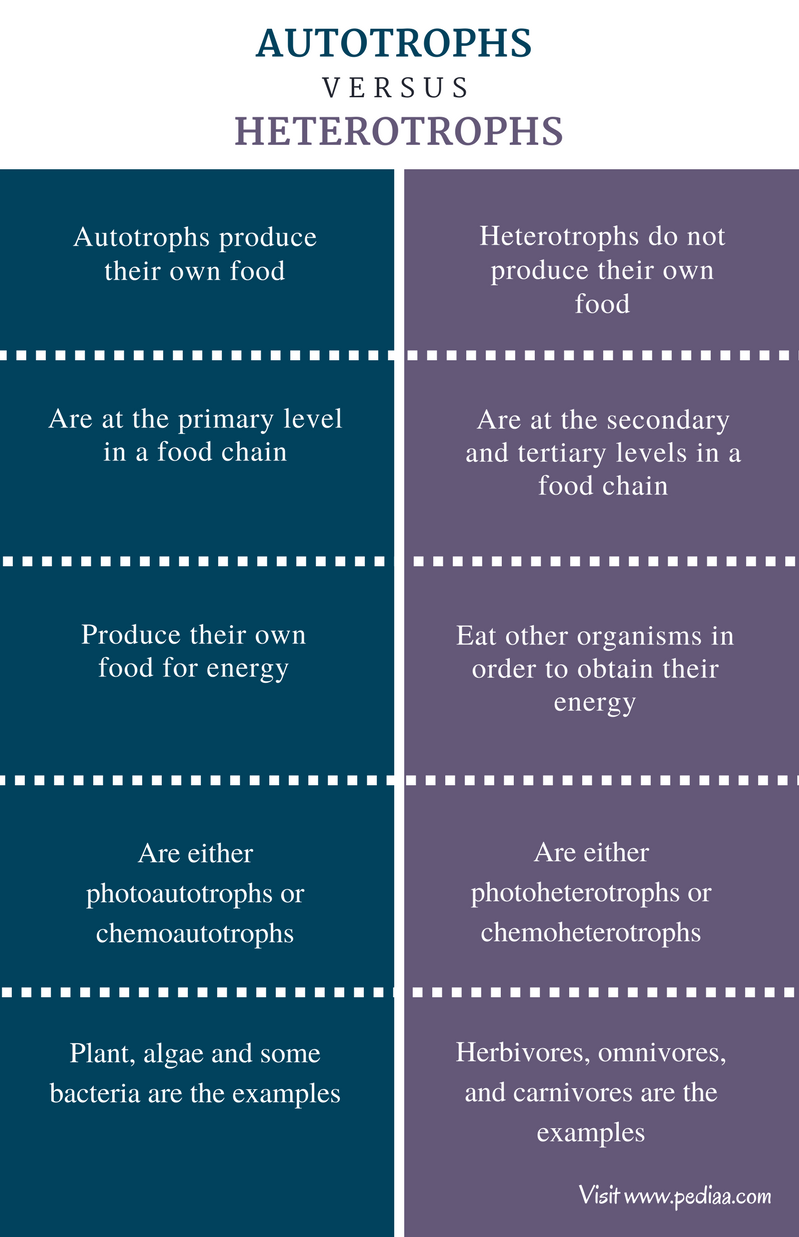 Difference Between Autotrophs and Heterotrophs - Comparison Summary