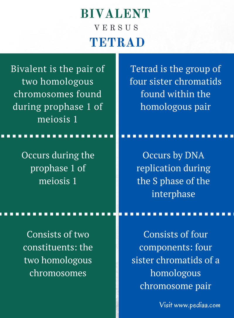 Difference Between Bivalent and Tetrad - Comparison Summary