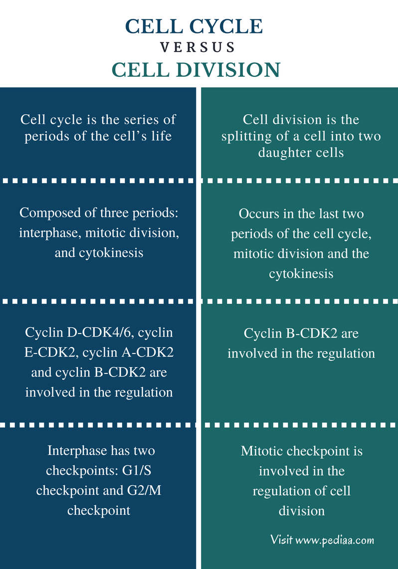 Difference Between Cell Cycle and Cell Division - Comparison Summary