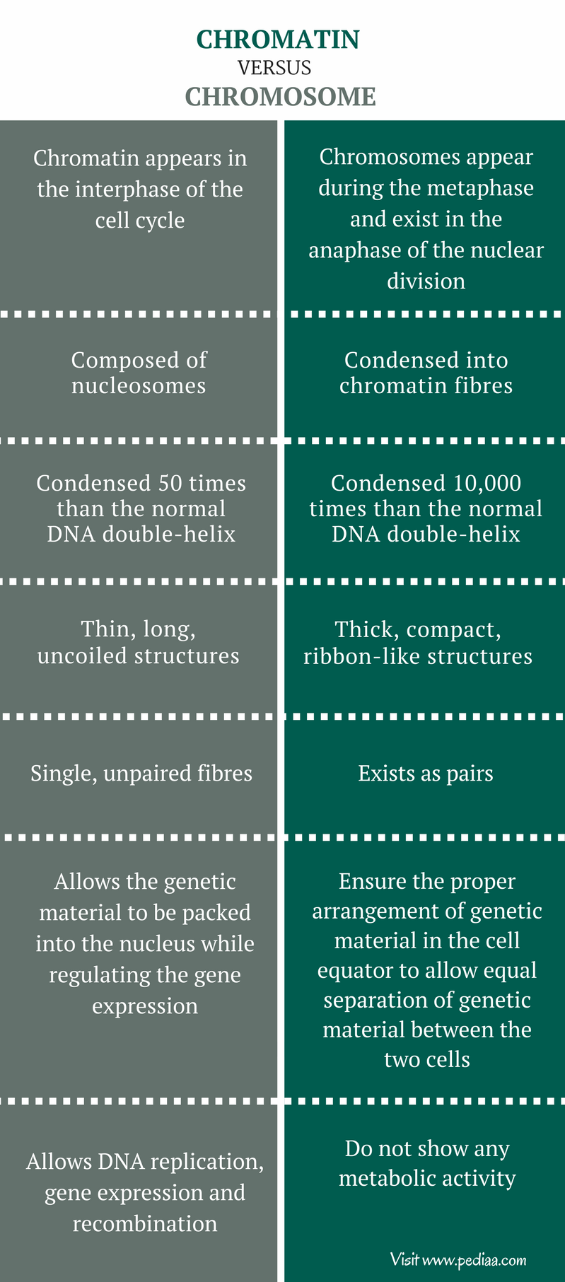 Difference Between Chromatin and Chromosome - Comparison Summary