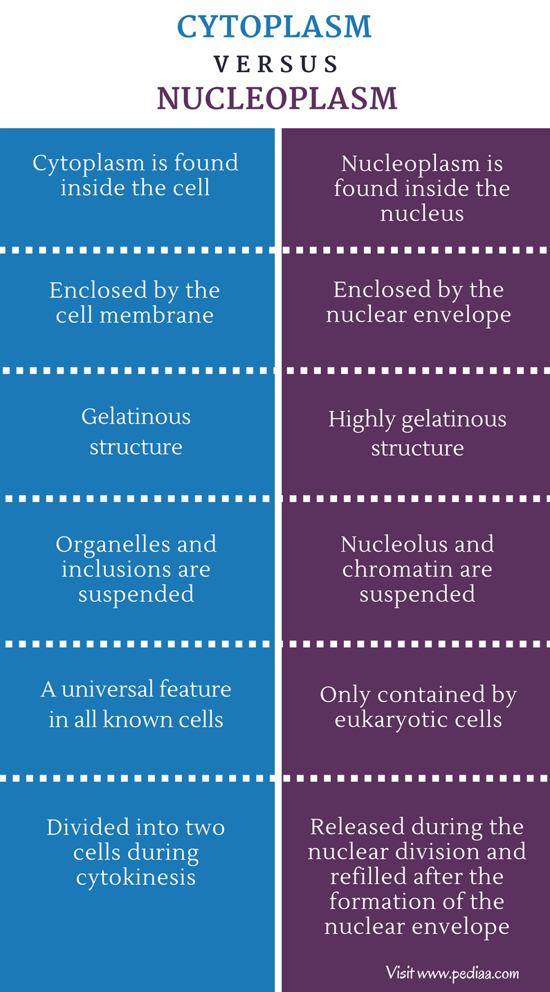 Difference Between Cytoplasm and Nucleoplasm - Comparison Summary