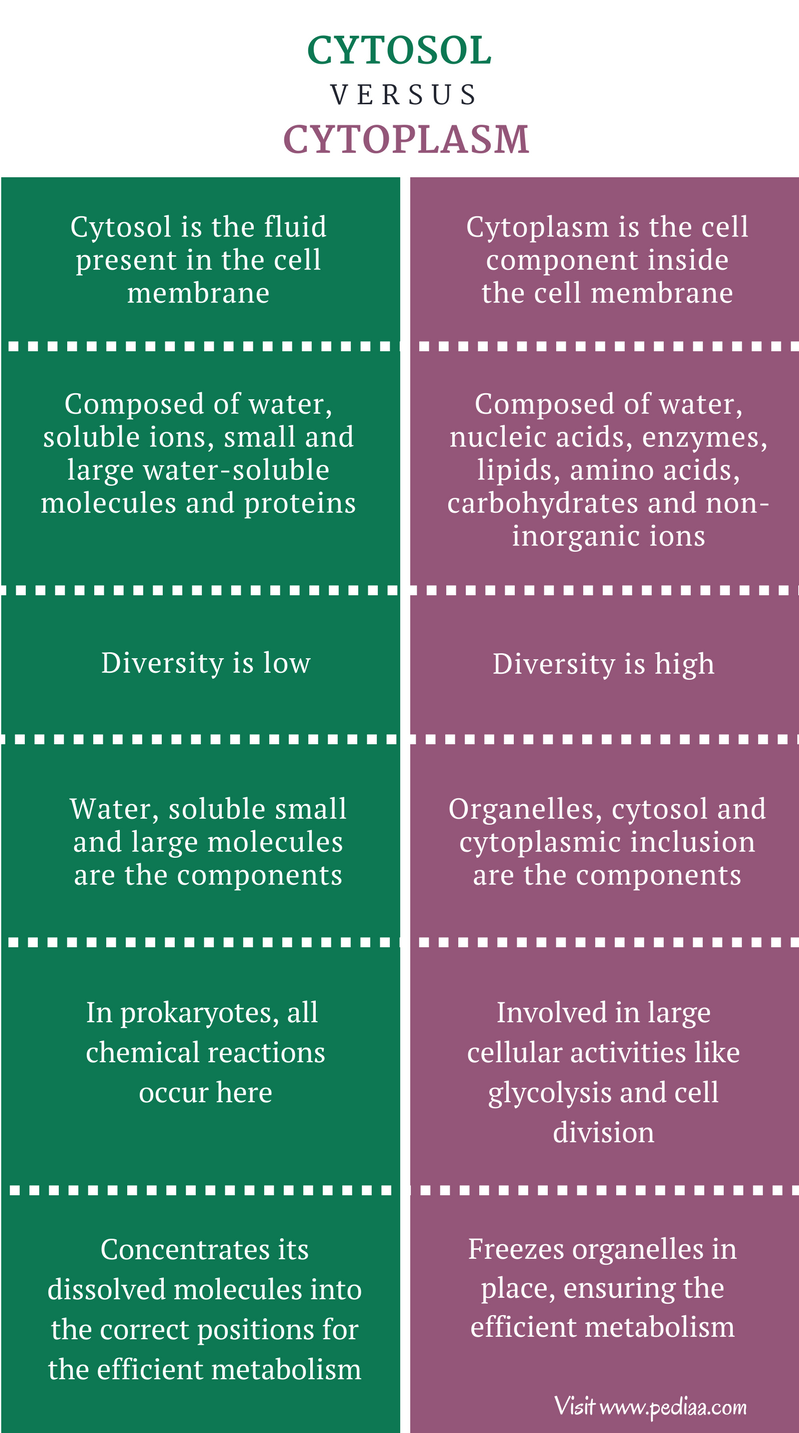 Difference Between Cytosol and Cytoplasm - Comparison Summary