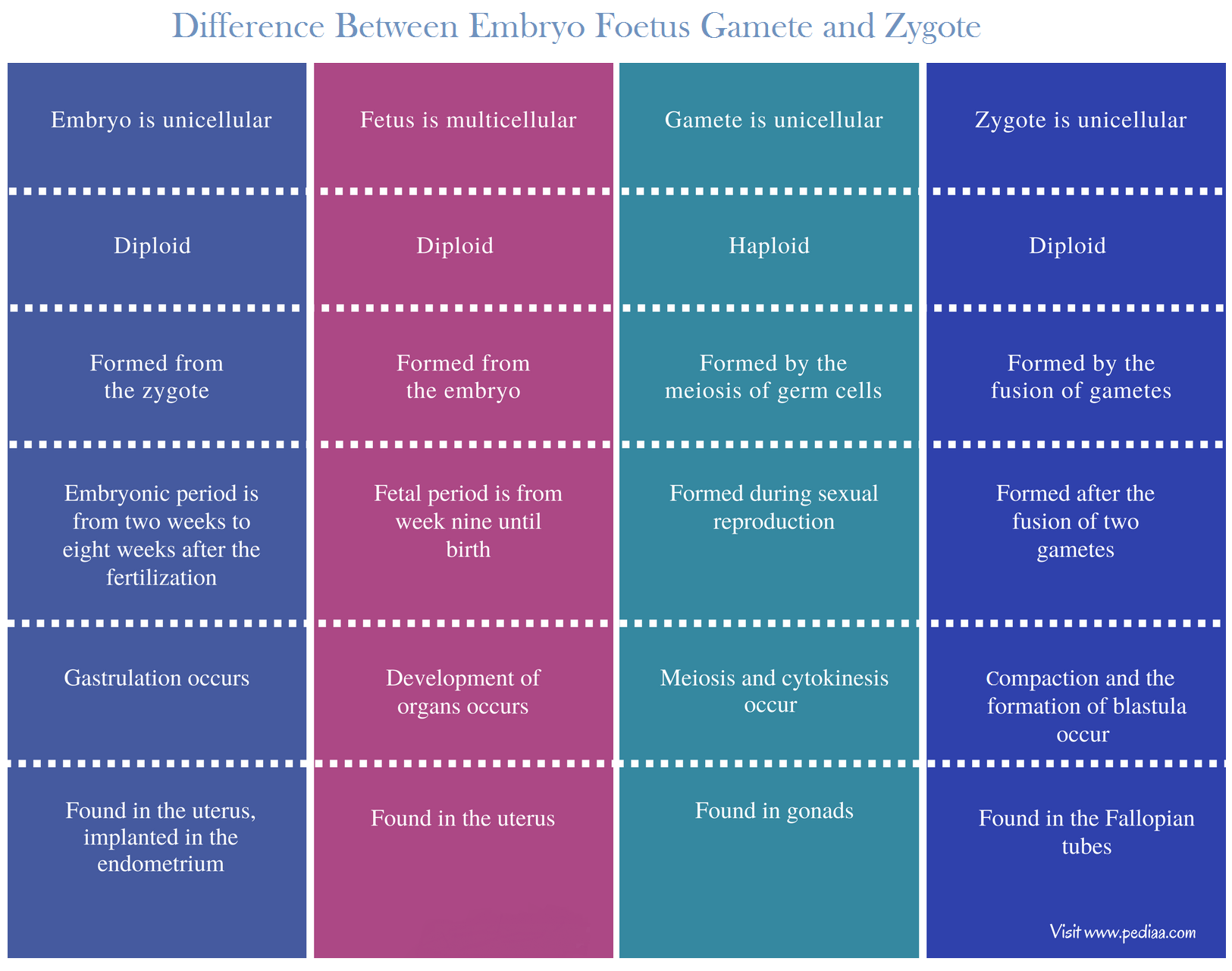 Difference Between Embryo Foetus Gamete and Zygote - Comparison Summary