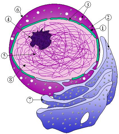 Main Difference - Euchromatin vs Heterochromatin