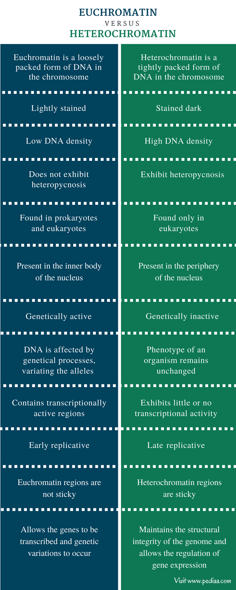 Difference Between Euchromatin and Heterochromatin - Comparison Summary