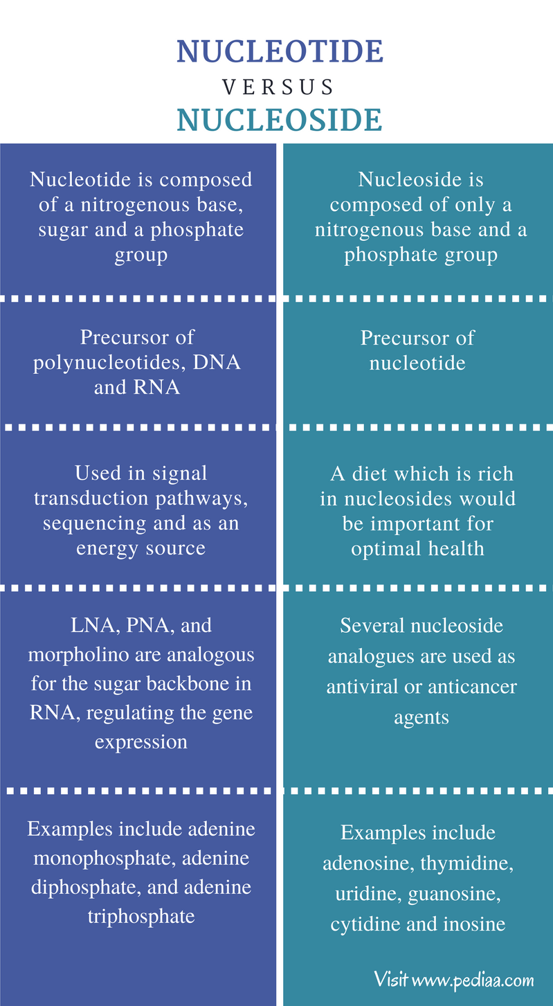 Difference Between Nucleotide and Nucleoside - Comparison Summary