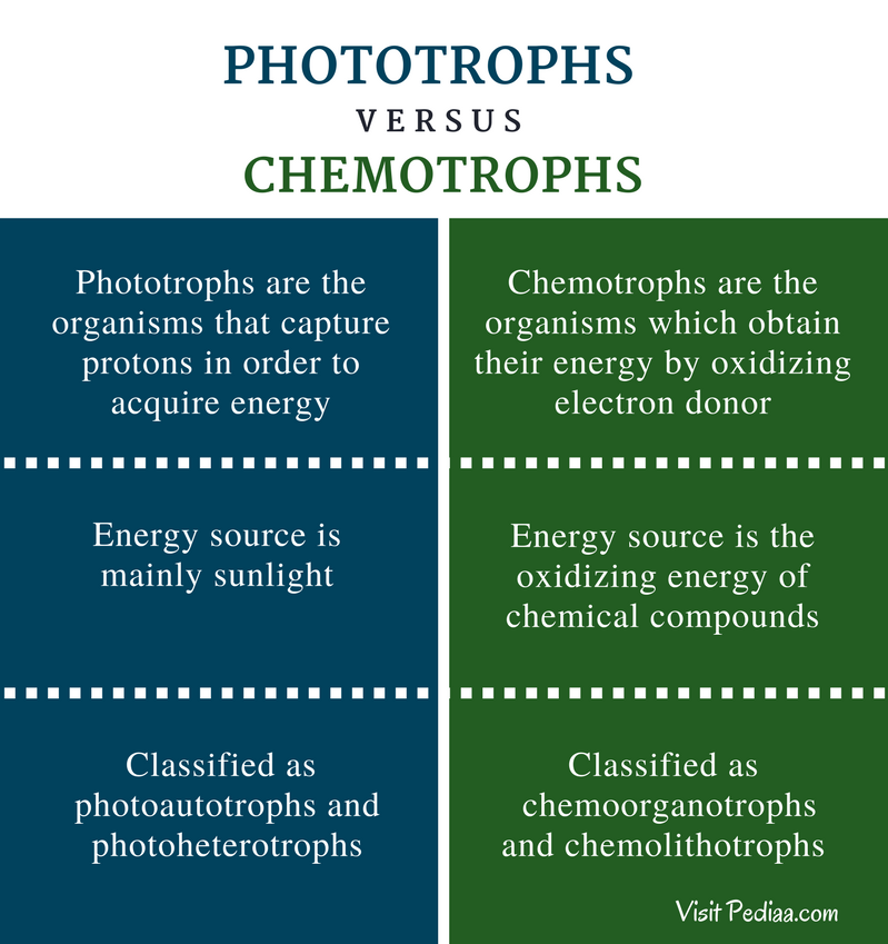 Difference Between Phototrophs and Chemotrophs | Definition ...