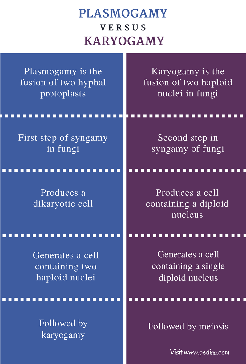 Difference Between Plasmogamy And Karyogamy - Comparison Summary