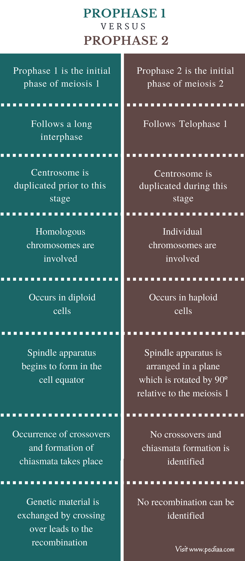 Difference Between Prophase 1 and 2 - Comparison Summary