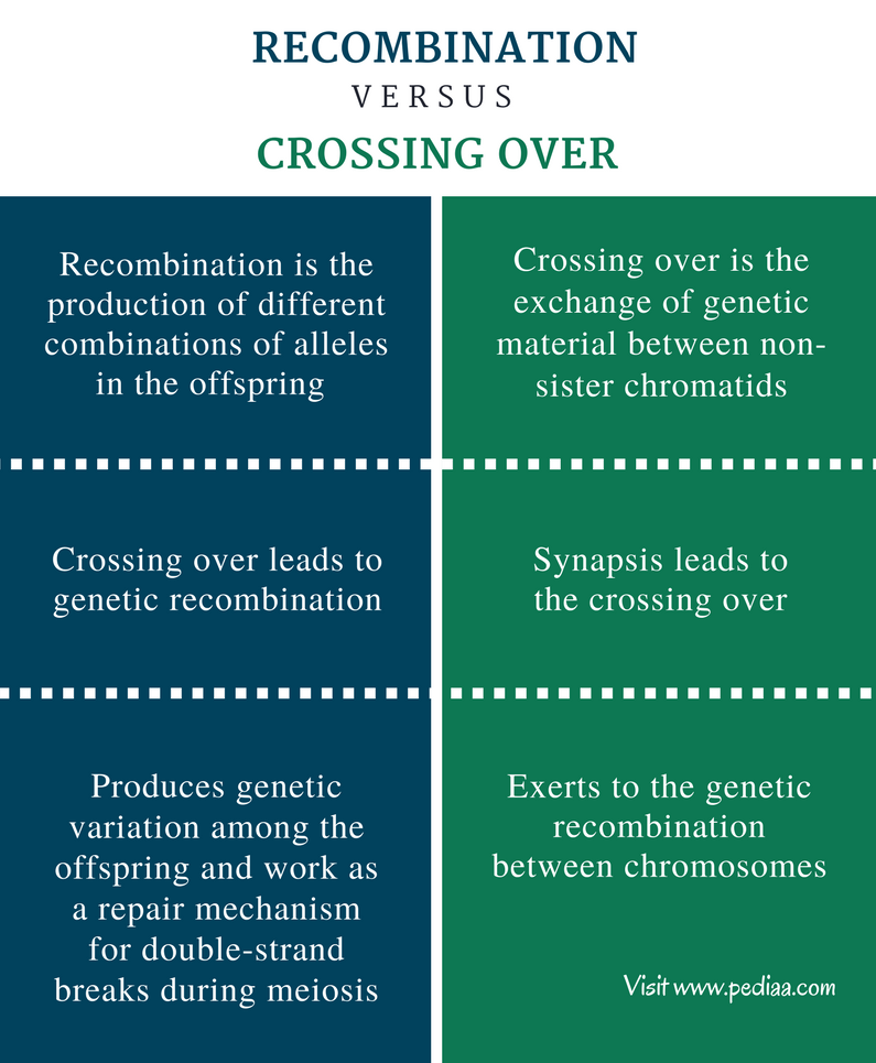 Difference Between Recombination and Crossing Over - Comparison Summary