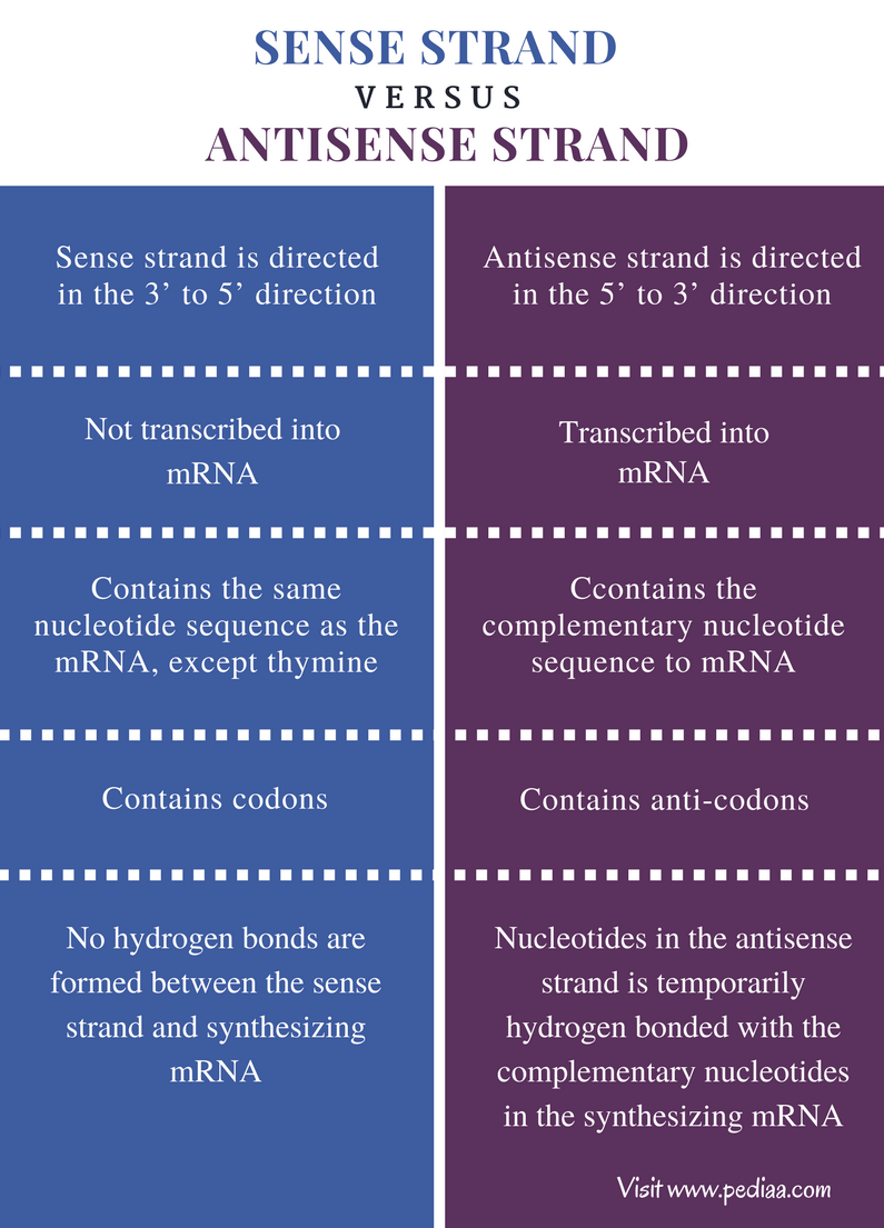 Difference Between Sense and Antisense Strand - Comparison Summary