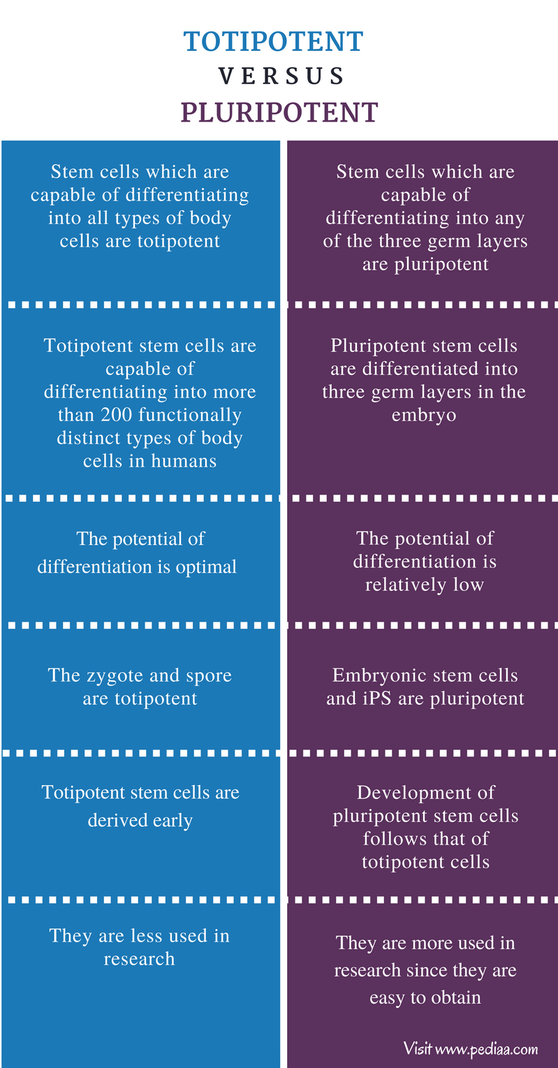 Difference Between Totipotent and Pluripotent - Comparison Summary