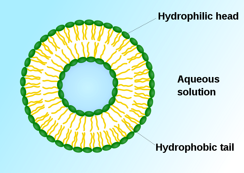 Difference Between Vesicle and Vacuole