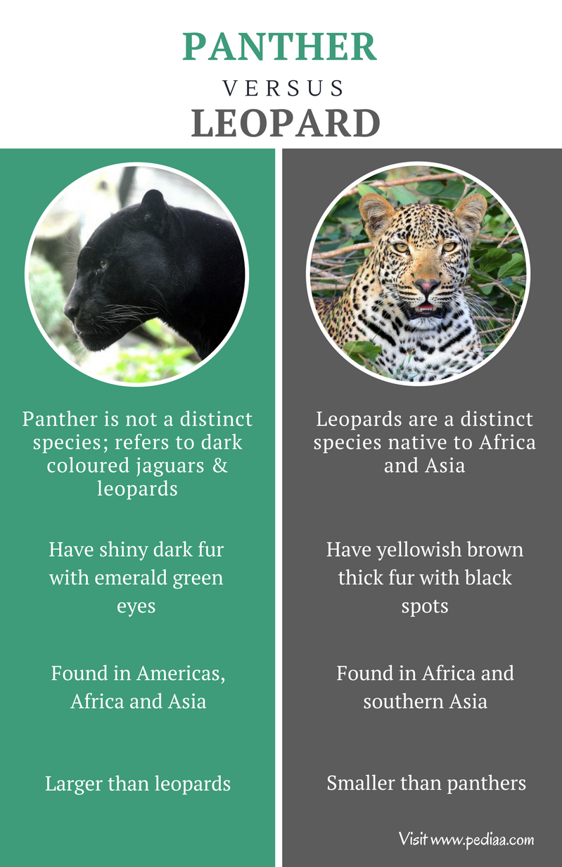 Difference between Panther and Leopard - Comparison Summary