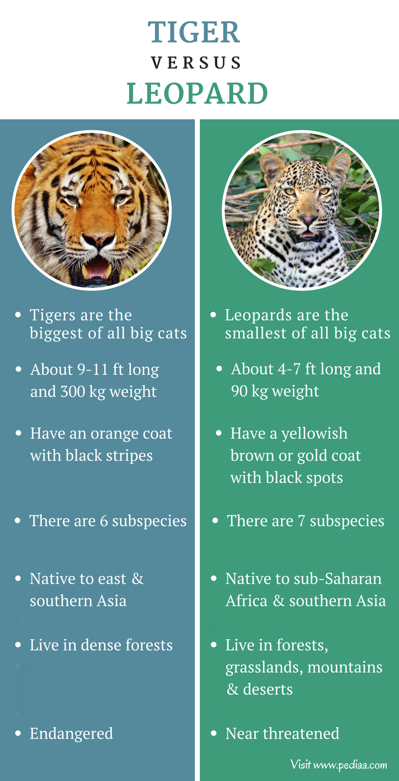 Difference between Tiger and Leopard - Comparison Summary