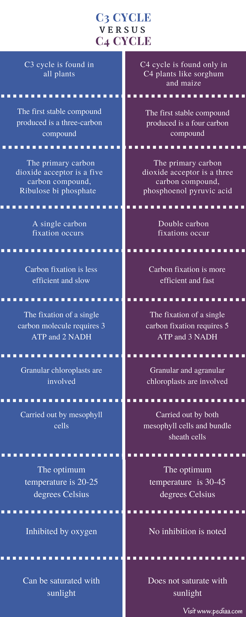 Difference Between C3 and C4 Cycle - Comparison Summary