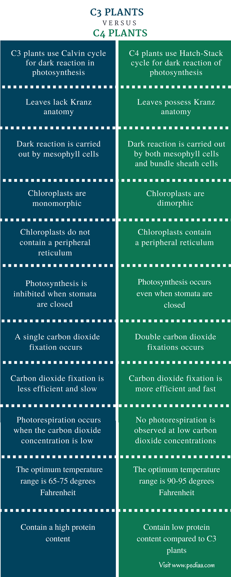 Difference Between C3 and C4 Plants - Comparison Summary