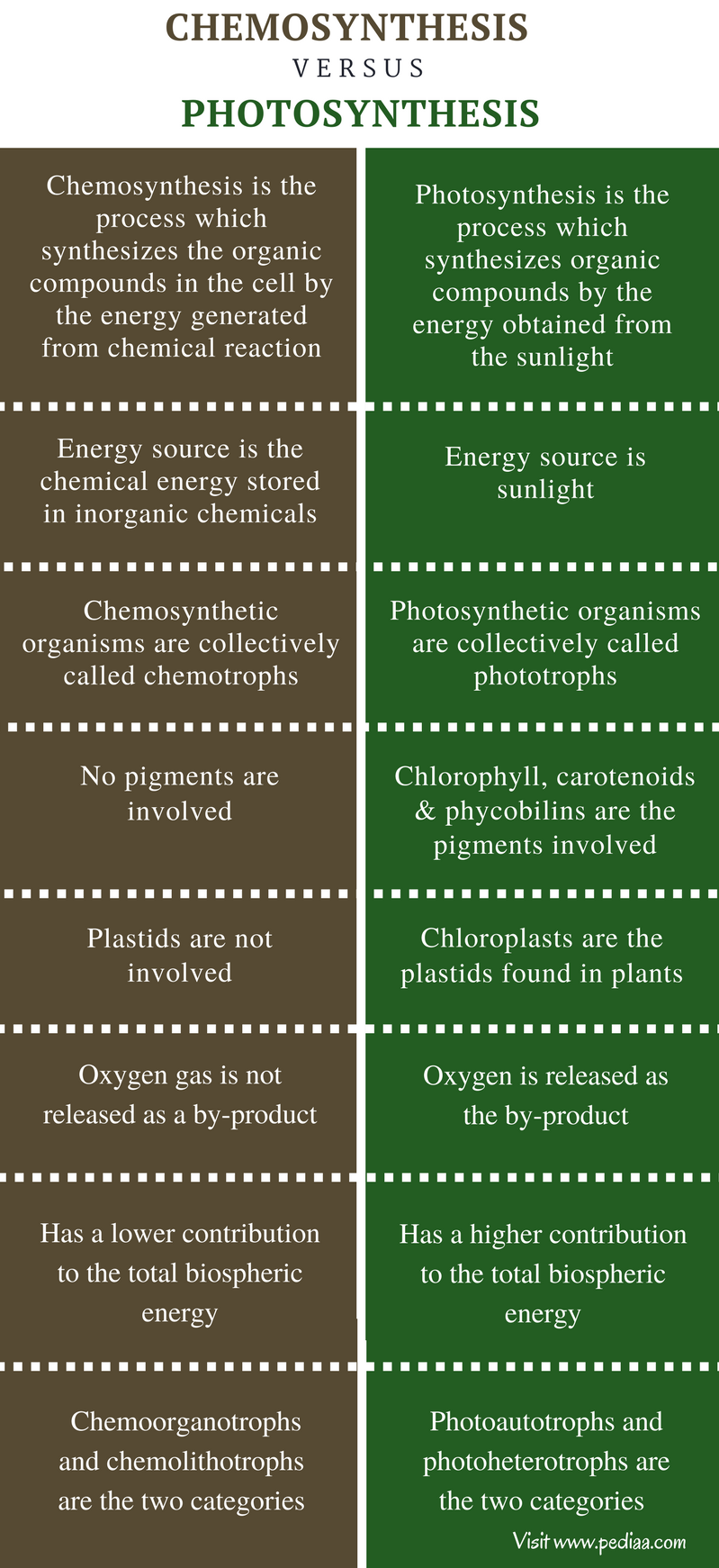 Difference Between Chemosynthesis and Photosynthesis - Comparison Summary