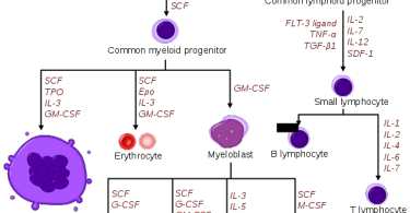 Difference Between Cytokines and Chemokines