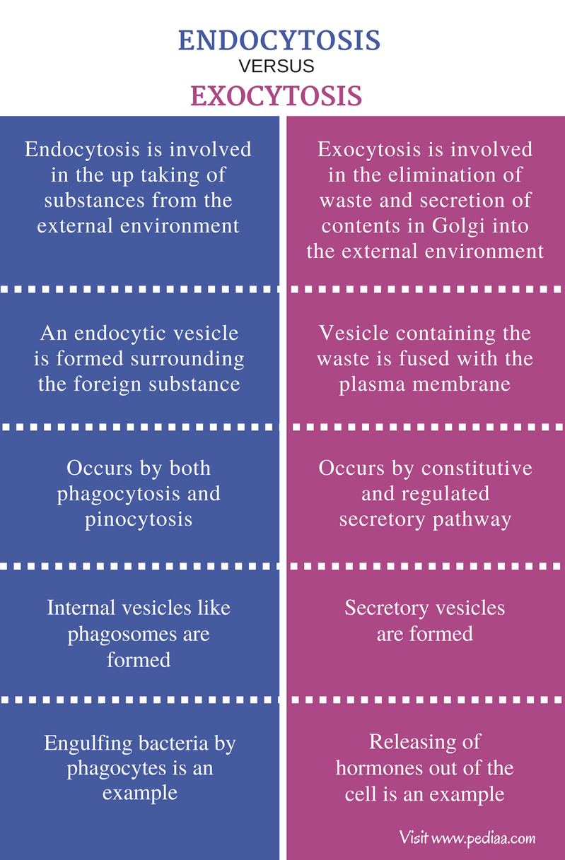 Difference Between Endocytosis And Exocytosis Types Mechanism