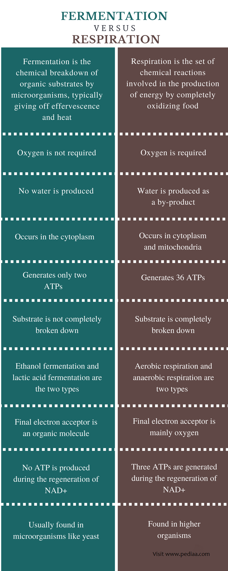 Difference Between Fermentation and Respiration - Comparison Summary