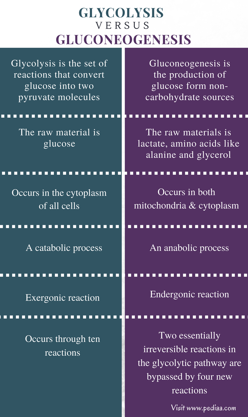 Difference Between Glycolysis and Gluconeogenesis - Comparison Summary