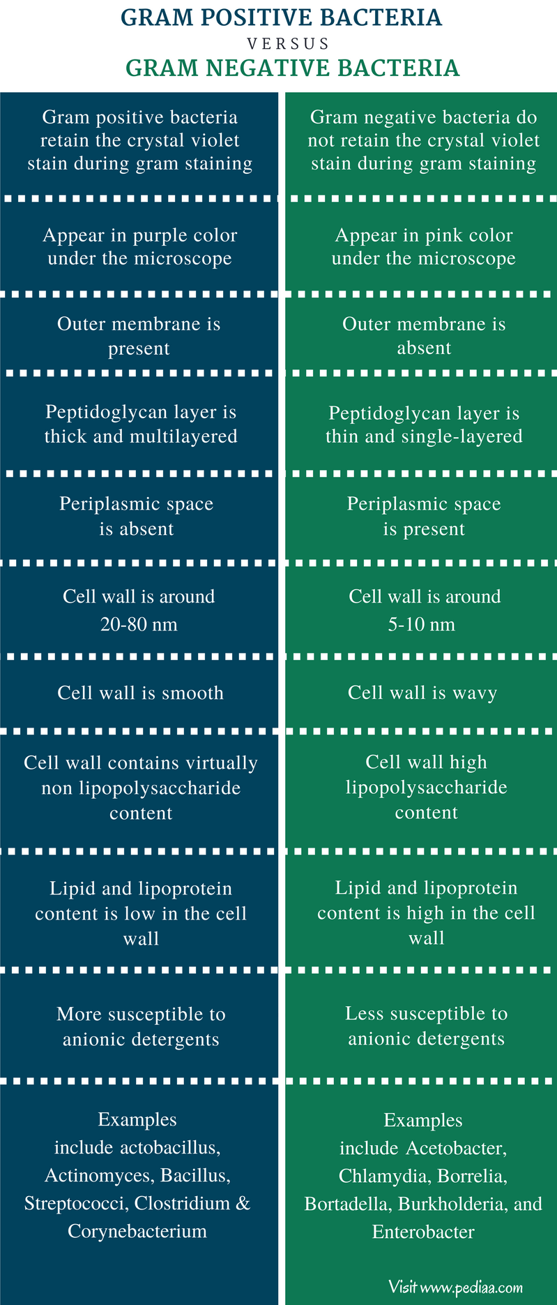 Difference Between Gram Positive and Gram Negative Bacteria - Comparison Summary