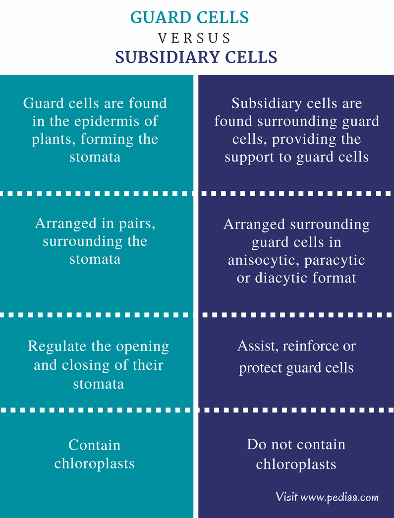 Difference Between Guard Cells and Subsidiary Cells - Comparison Summary