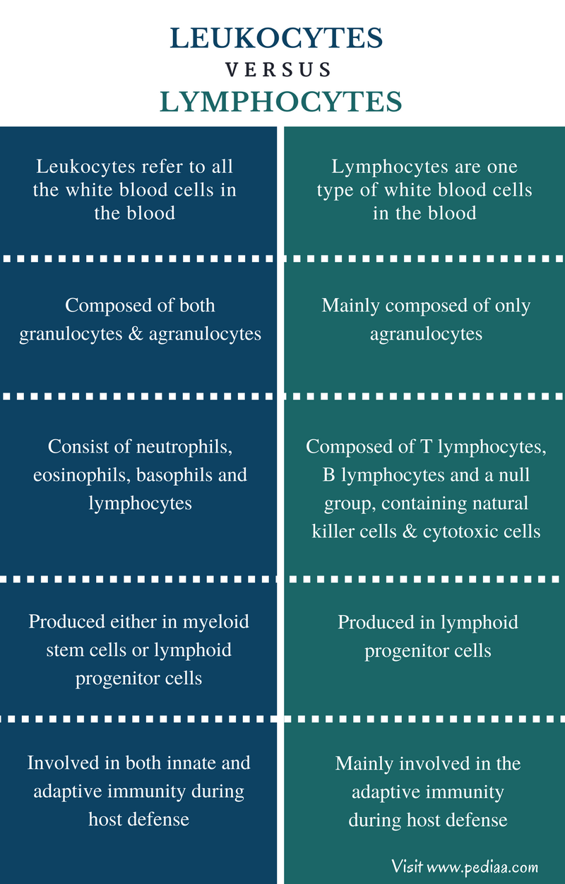 Difference Between Leukocytes and Lymphocytes - Comparison Summary