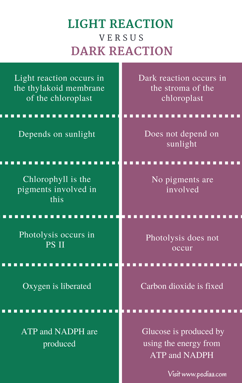 Difference Between Light and Dark Reaction - Comparison Summary
