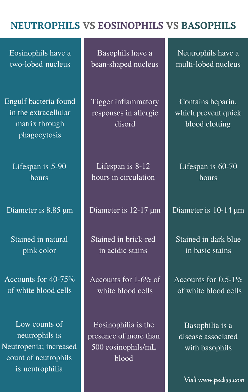 Difference Between Neutrophils Eosinophils and Basophils - Comparison Summary