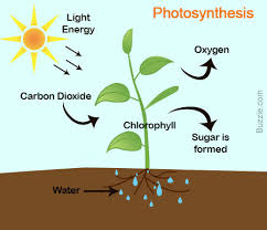 Difference Between Photosynthesis and Cellular Respiration