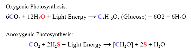 Difference Between Photosynthesis and Cellular Respiration - 7
