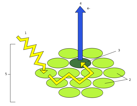 Difference Between Photosystem 1 and 2
