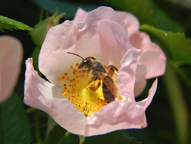Main Difference - Pollination vs Fertilization