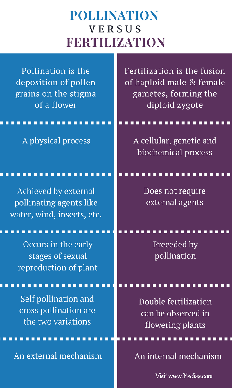 Difference Between Pollination and Fertilization - Comparison Summary