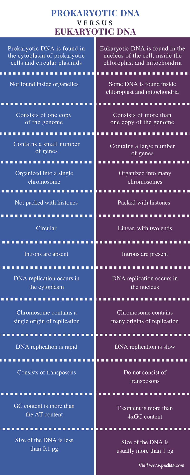 Difference Between Prokaryotic and Eukaryotic DNA - Comparison Summary