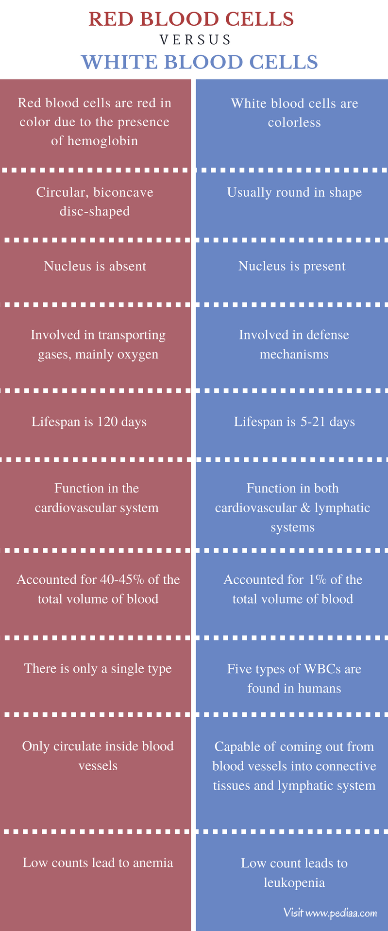 Difference Between Red Blood Cells and White Blood Cells - Comparison Summary