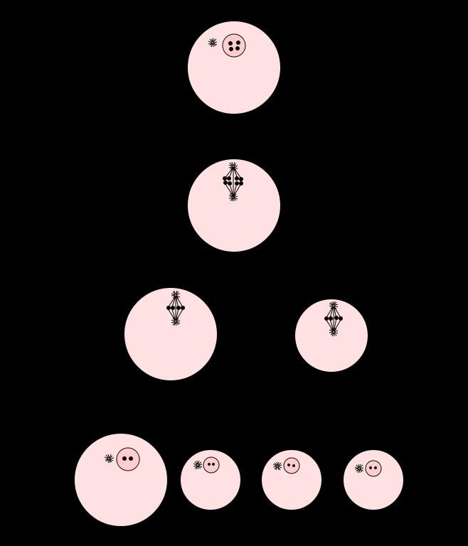 Key Difference - Spermatogenesis vs Oogenesis